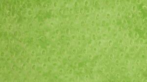 Minky - Verde